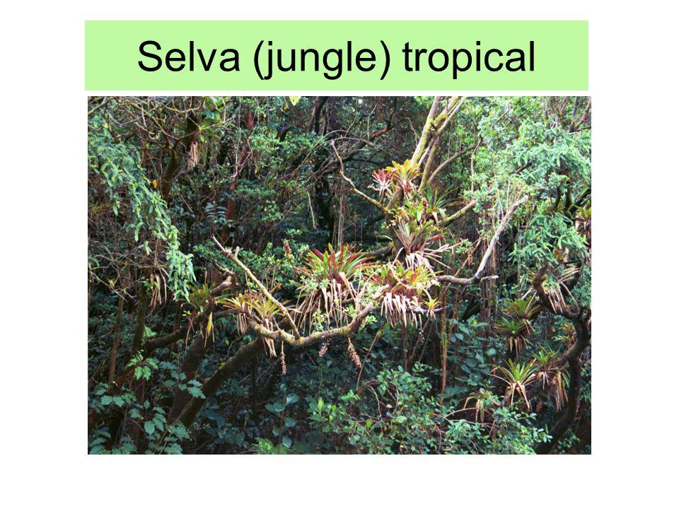 Selva (jungle) tropical