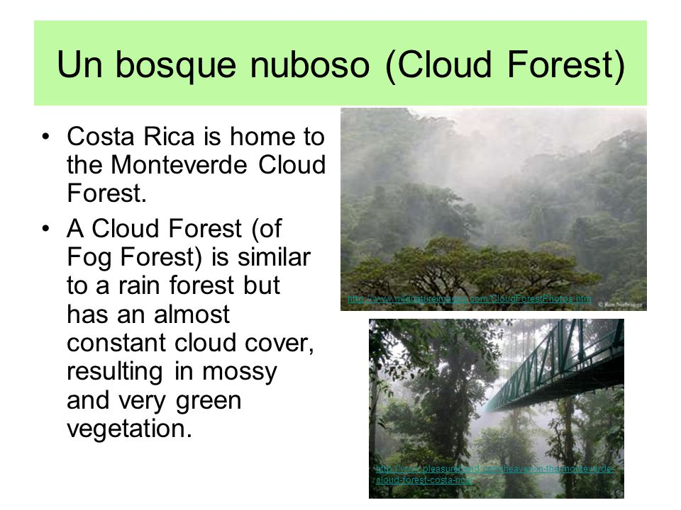 Un bosque nuboso (Cloud Forest) Costa Rica is home to the Monteverde Cloud Forest. A Cloud Forest (of Fog Forest) is similar to a rain forest but has