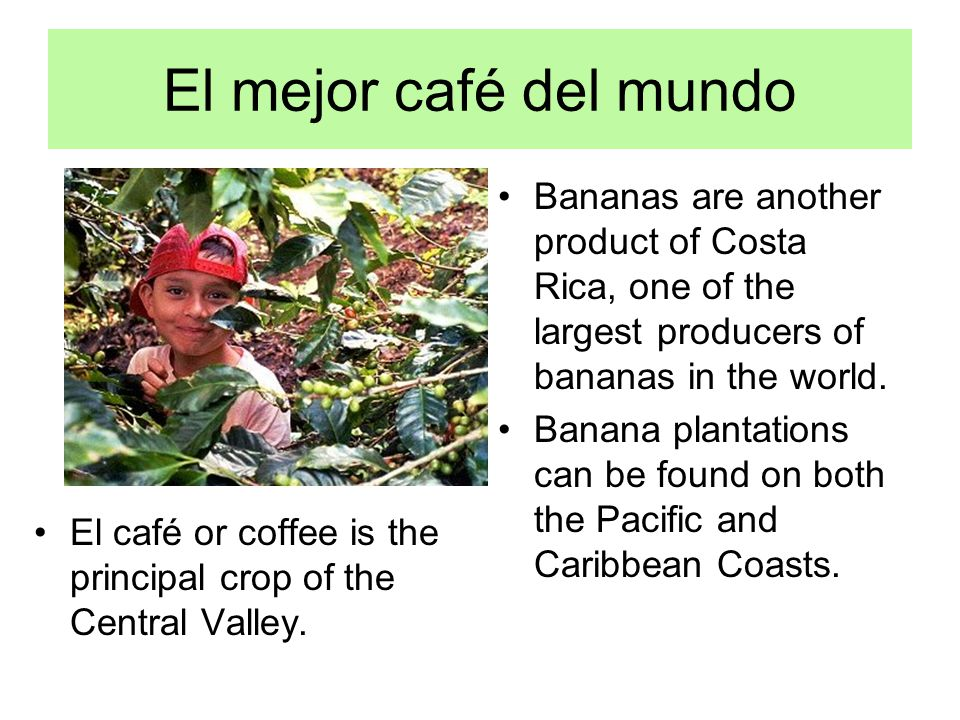 El mejor café del mundo Bananas are another product of Costa Rica, one of the largest producers of bananas in the world. Banana plantations can be fou