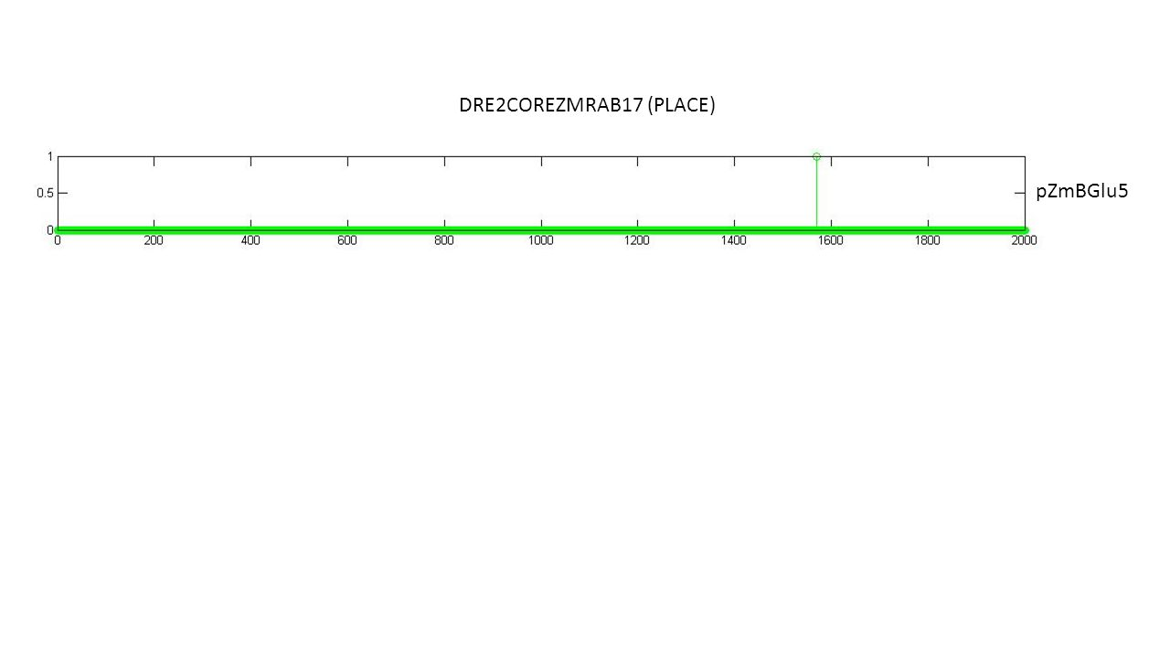 DRE2COREZMRAB17 (PLACE) pZmBGlu5