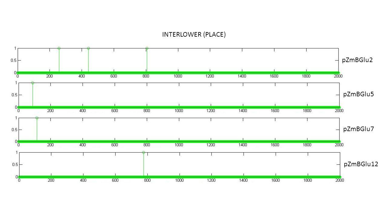 INTERLOWER (PLACE) pZmBGlu5 pZmBGlu7 pZmBGlu12 pZmBGlu2