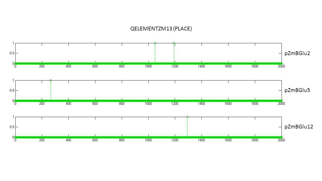QELEMENTZM13 (PLACE) pZmBGlu2 pZmBGlu5 pZmBGlu12