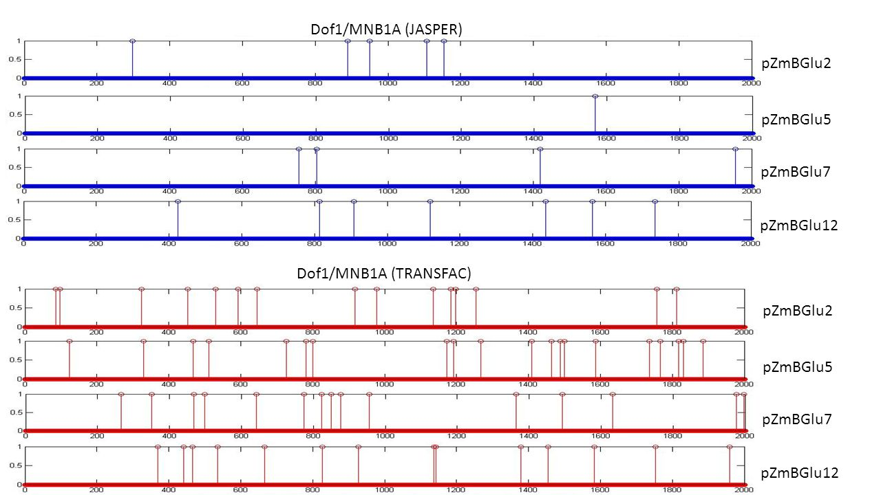 Dof1/MNB1A (JASPER) pZmBGlu2 pZmBGlu5 pZmBGlu7 pZmBGlu12 pZmBGlu2 pZmBGlu5 pZmBGlu7 pZmBGlu12 Dof1/MNB1A (TRANSFAC)