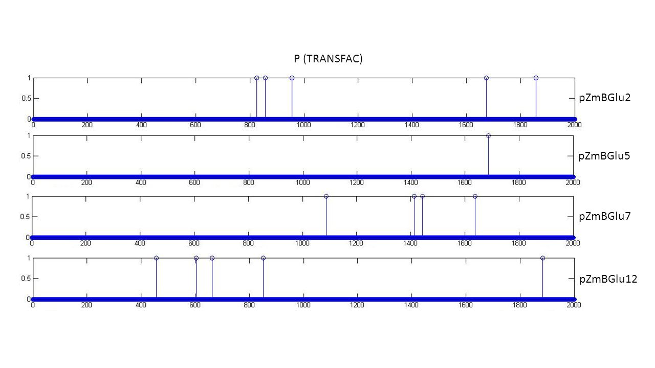 P (TRANSFAC) pZmBGlu2 pZmBGlu5 pZmBGlu7 pZmBGlu12