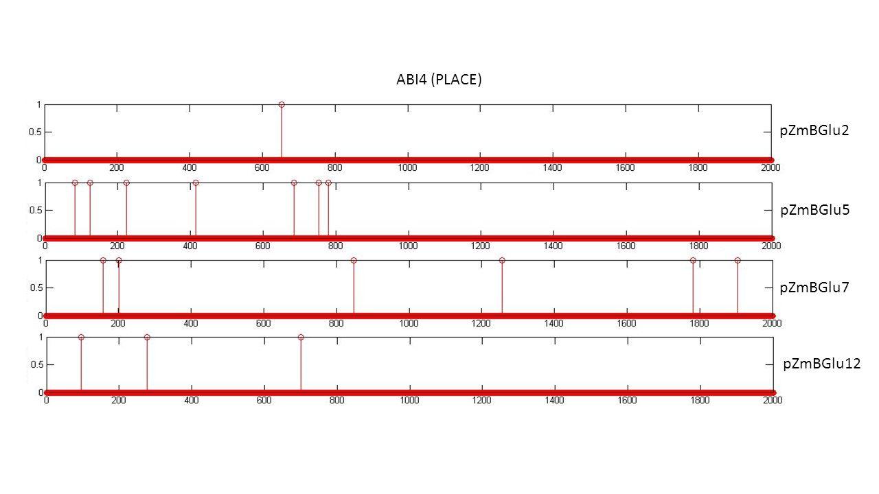 ABI4 (PLACE) pZmBGlu2 pZmBGlu5 pZmBGlu7 pZmBGlu12