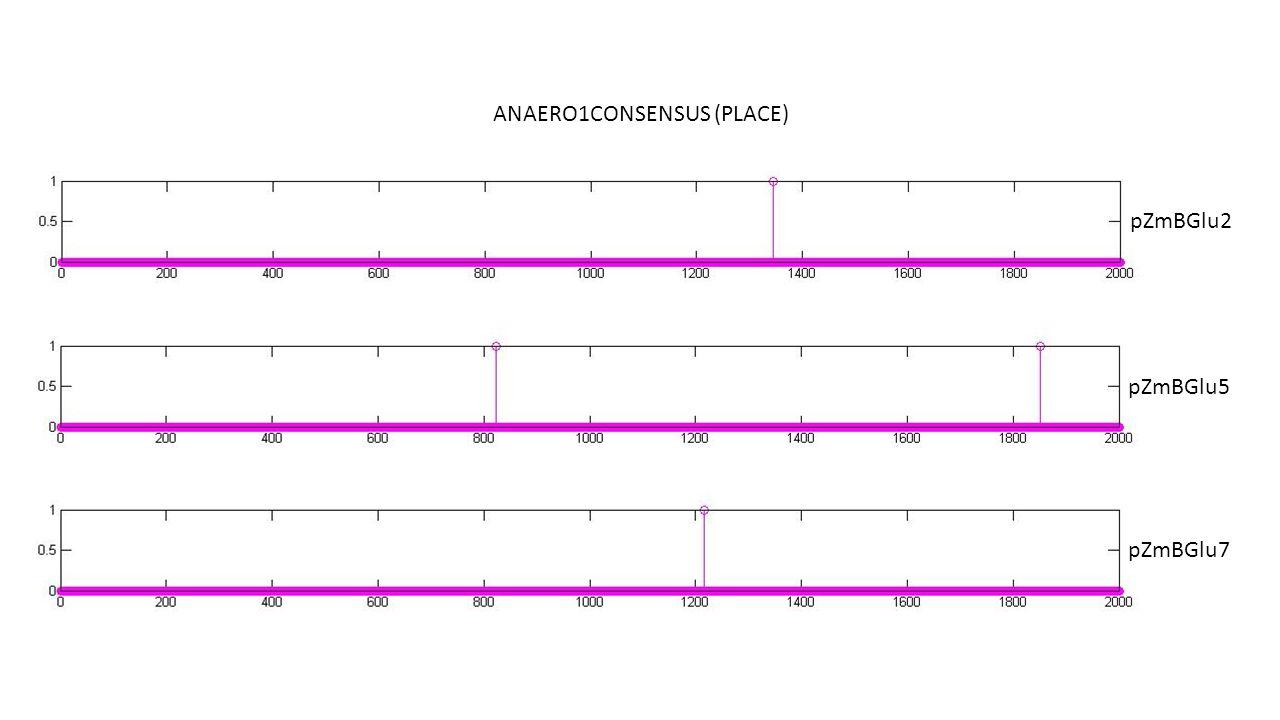 ANAERO1CONSENSUS (PLACE) pZmBGlu2 pZmBGlu5 pZmBGlu7