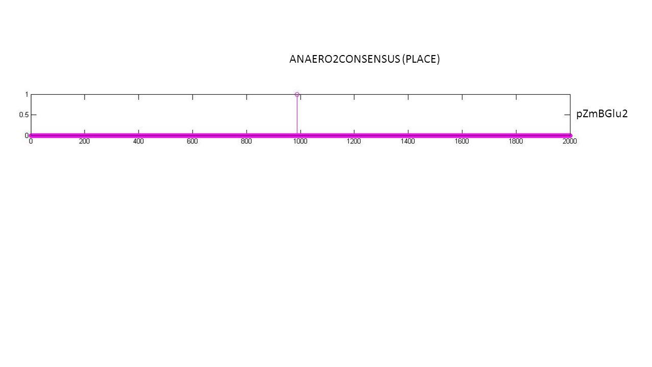ANAERO2CONSENSUS (PLACE) pZmBGlu2