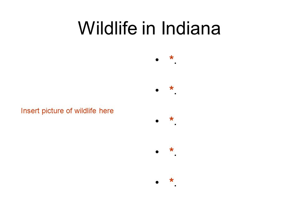 Wildlife in Indiana *. Insert picture of wildlife here