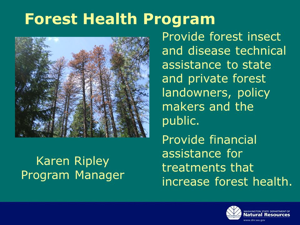 Karen Ripley Program Manager Forest Health Program Provide forest insect and disease technical assistance to state and private forest landowners, policy makers and the public.