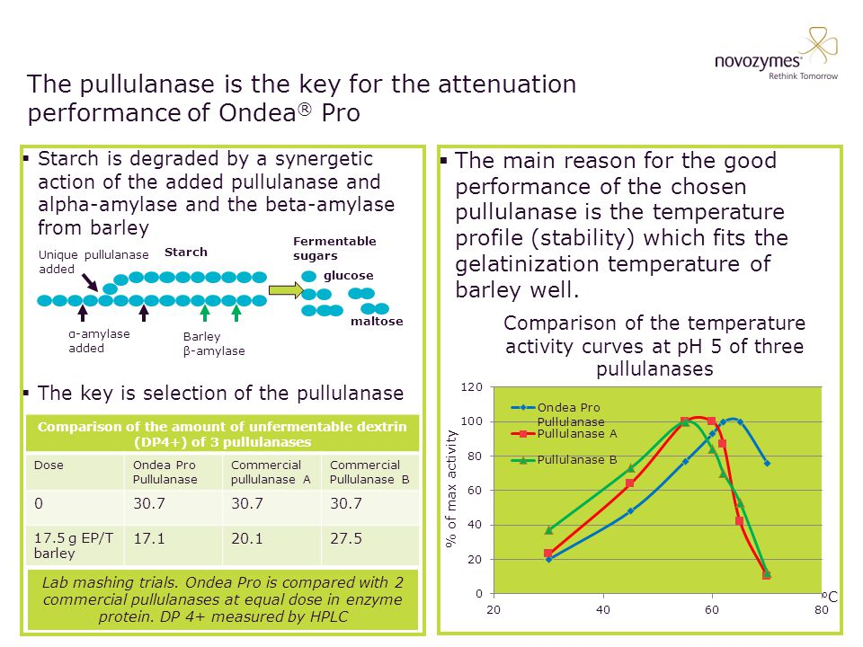 The pullulanase is the key for the attenuation performance of Ondea ® Pro  Starch is degraded by a synergetic action of the added pullulanase and alpha-amylase and the beta-amylase from barley  The key is selection of the pullulanase  The main reason for the good performance of the chosen pullulanase is the temperature profile (stability) which fits the gelatinization temperature of barley well.