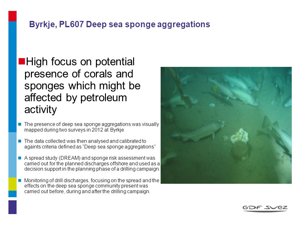 Byrkje, PL607 Deep sea sponge aggregations High focus on potential presence of corals and sponges which might be affected by petroleum activity The pr