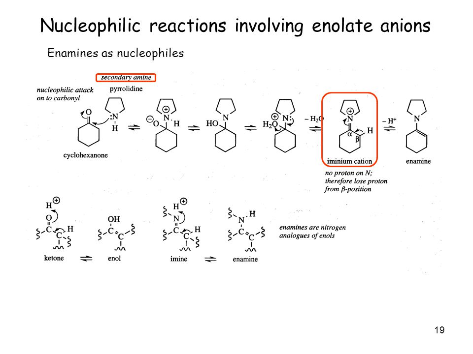 19 Nucleophilic reactions involving enolate anions Enamines as nucleophiles