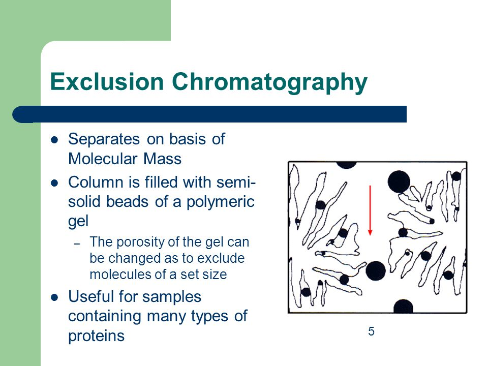 Exclusion Chromatography Separates on basis of Molecular Mass Column is filled with semi- solid beads of a polymeric gel – The porosity of the gel can