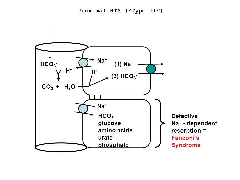 Proximal RTA ( Type II ) HCO 3 - (1) Na + (3) HCO 3 - H+H+ CO 2 H2OH2O + H+H+ Na + HCO 3 - glucose amino acids urate phosphate Defective Na + - dependent resorption = Fanconi's Syndrome