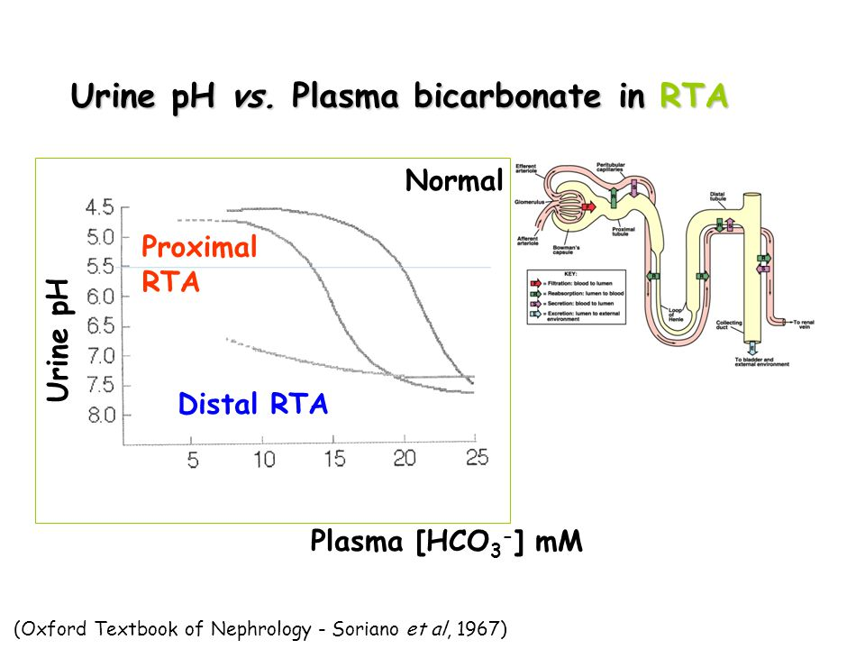 Urine pH Plasma [HCO 3 - ] mM Normal Proximal RTA Distal RTA (Oxford Textbook of Nephrology - Soriano et al, 1967) Urine pH vs. Plasma bicarbonate in