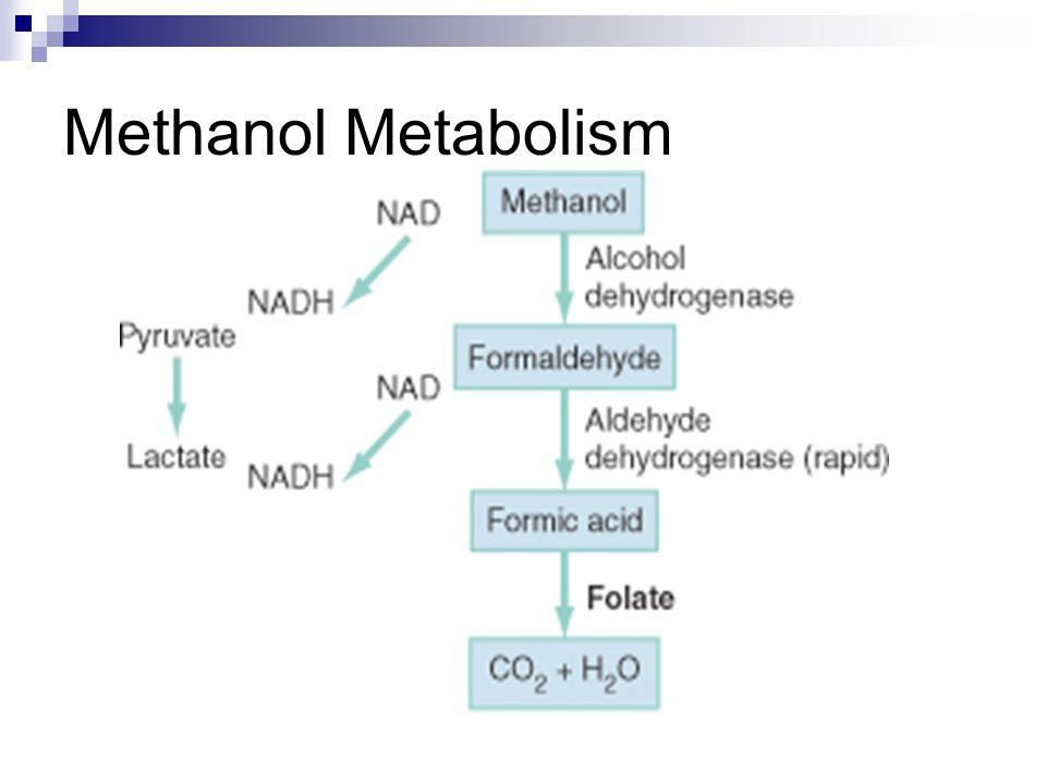 Methanol Metabolism