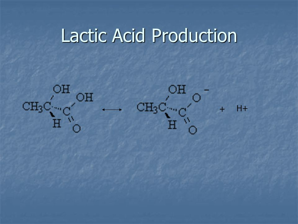 + H+ Lactic Acid Production