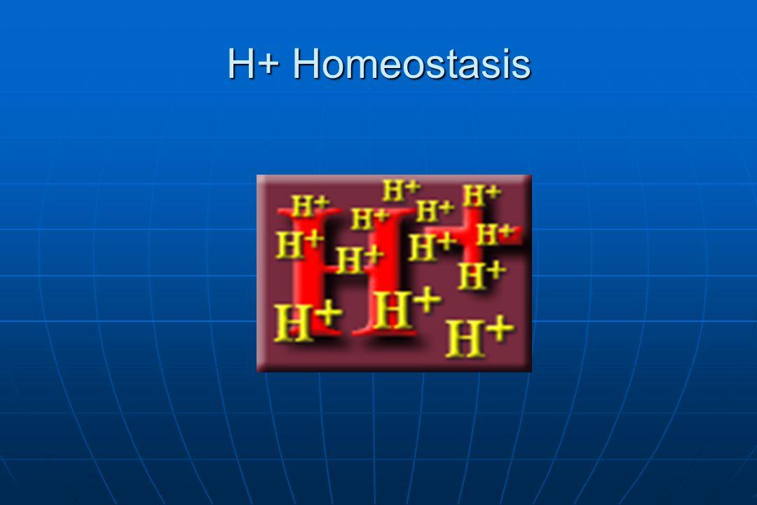 H+ Homeostasis