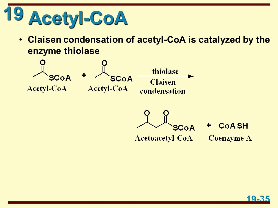 19 19-35 Acetyl-CoA Claisen condensation of acetyl-CoA is catalyzed by the enzyme thiolase