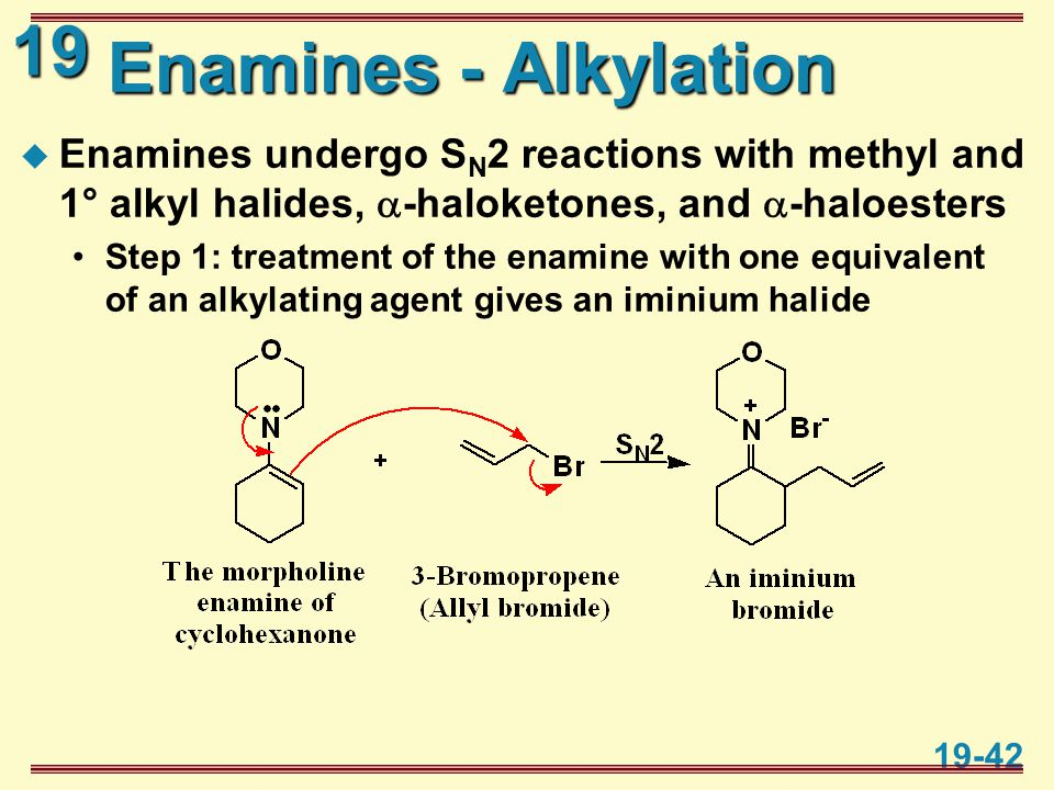 19 19-42 Enamines - Alkylation  Enamines undergo S N 2 reactions with methyl and 1° alkyl halides,  -haloketones, and  -haloesters Step 1: treatmen
