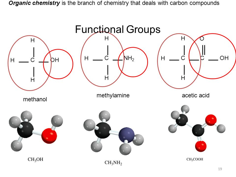 19 Organic chemistry is the branch of chemistry that deals with carbon compounds C H H H OH C H H H NH 2 C H H H COH O methanol methylamineacetic acid Functional Groups