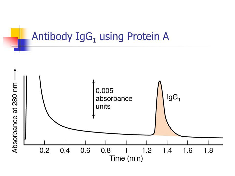Antibody IgG 1 using Protein A