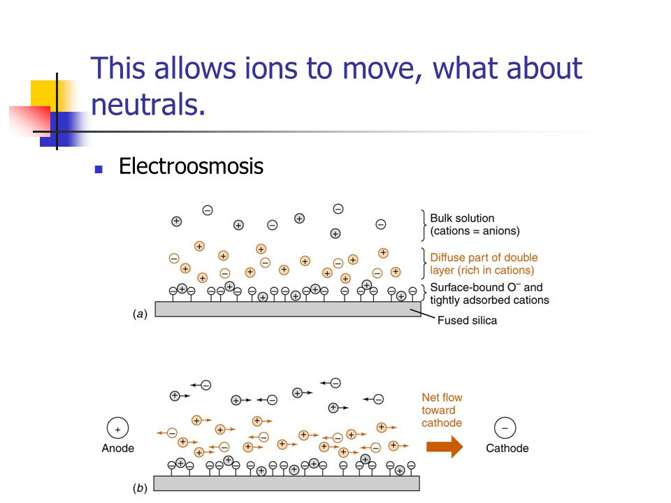 This allows ions to move, what about neutrals. Electroosmosis