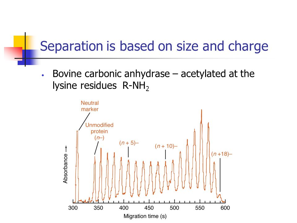 Separation is based on size and charge Bovine carbonic anhydrase – acetylated at the lysine residues R-NH 2