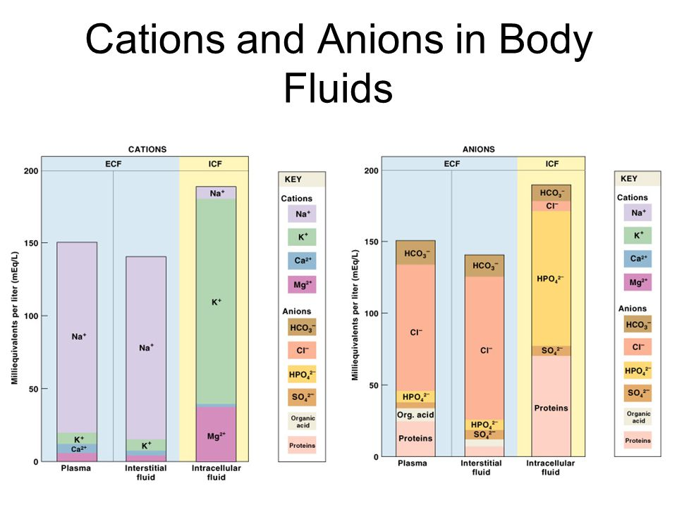 Principles of Fluid and Electrolyte Regulation 1.All of the body's homeostatic mechanisms that monitor and adjust body fluid composition respond to changes in the ECF, not in the ICF 2.No receptors directly monitor fluid or electrolyte balance (only volume and osmolarity) 3.Cells cannot move water molecules by active transport 4.The body's water or electrolyte content will rise if dietary gains exceed environmental losses, and will fall if losses exceed gains