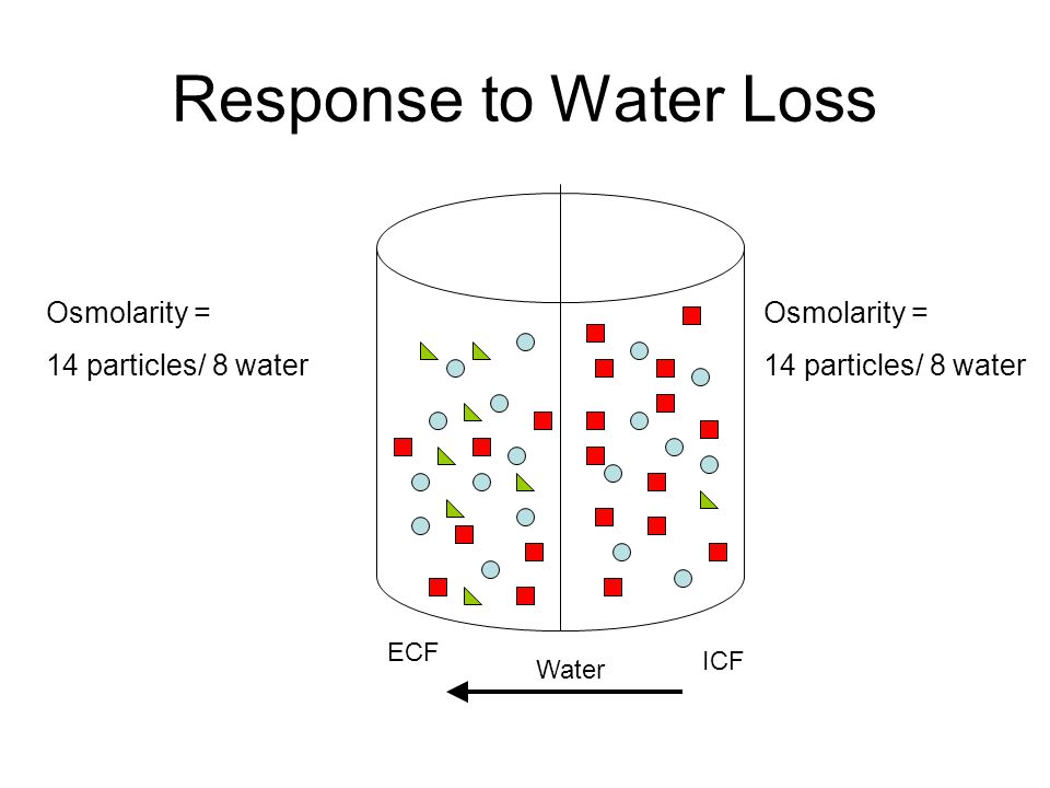 ECF ICF Osmolarity = 14 particles/ 8 water Osmolarity = 14 particles/ 8 water Result Osmotic balance, but at higher concentrations, lower volumes (less water) Original Osmolarity = 14 particles/10 water