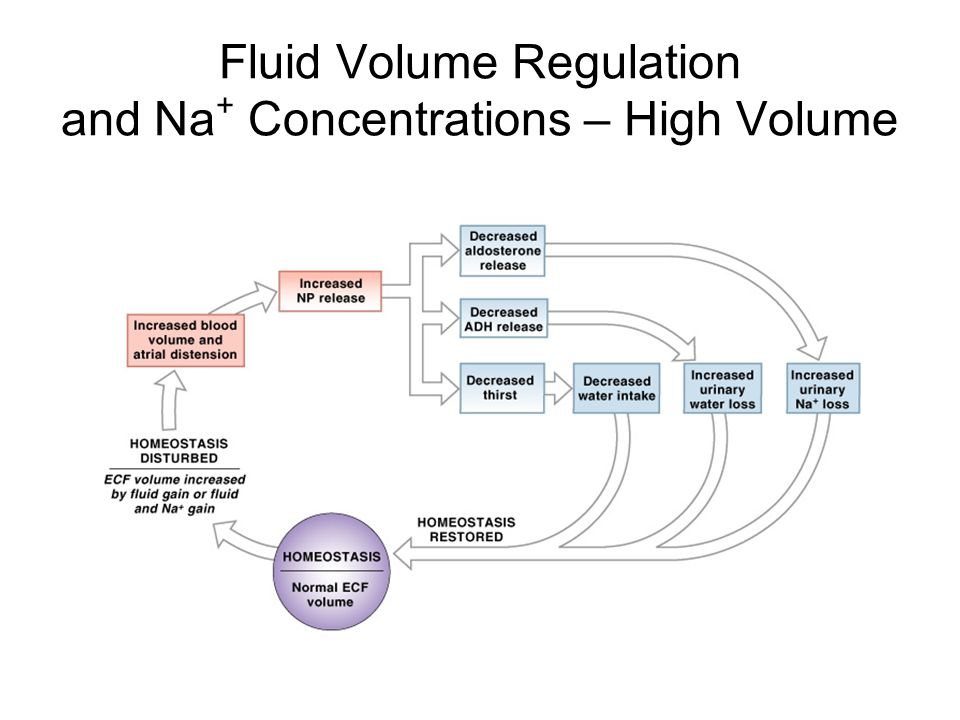 ECF Volume decrease If plasma volume is inadequate: –blood volume and blood pressure decline –renin–angiotensin system is activated –water and Na + losses are reduced by ADH and aldosterone –ECF volume increases