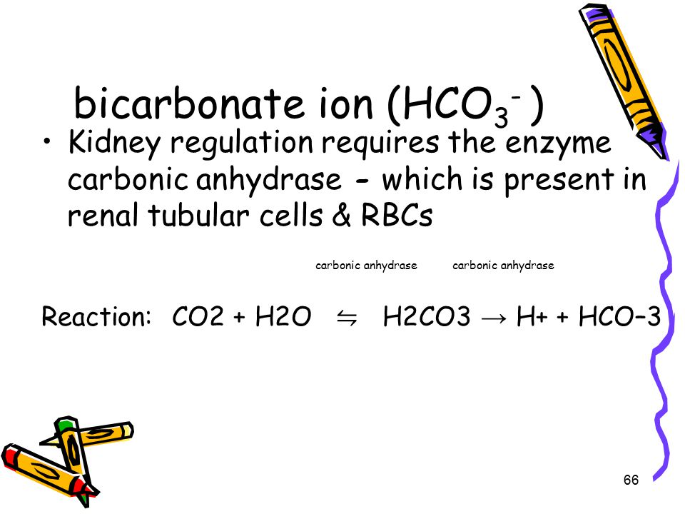 bicarbonate ion (HCO 3 - ) Kidney regulation requires the enzyme carbonic anhydrase - which is present in renal tubular cells & RBCscarbonic anhydrase Reaction: CO2 + H2O ⇋ H2CO3 → H+ + HCO–3 66