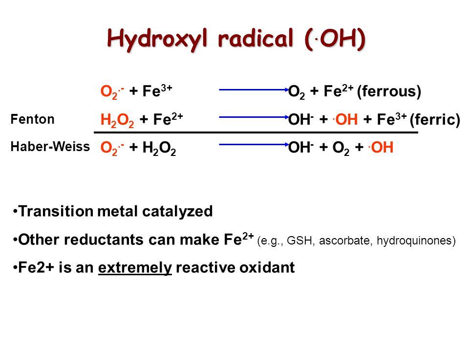 Hydroxyl radical (. OH) O 2.- + Fe 3+ O 2 + Fe 2+ (ferrous) H 2 O 2 + Fe 2+ OH - +. OH + Fe 3+ (ferric) O 2.- + H 2 O 2 OH - + O 2 +. OH Haber-Weiss F