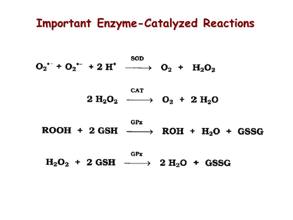 Important Enzyme-Catalyzed Reactions