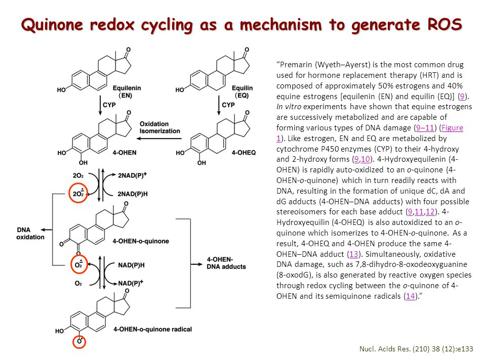 Quinone redox cycling as a mechanism to generate ROS Premarin (Wyeth–Ayerst) is the most common drug used for hormone replacement therapy (HRT) and is composed of approximately 50% estrogens and 40% equine estrogens [equilenin (EN) and equilin (EQ)] (9).