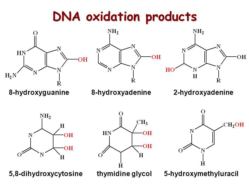 8-hydroxyguanine 8-hydroxyadenine 2-hydroxyadenine 5,8-dihydroxycytosine thymidine glycol 5-hydroxymethyluracil DNA oxidation products