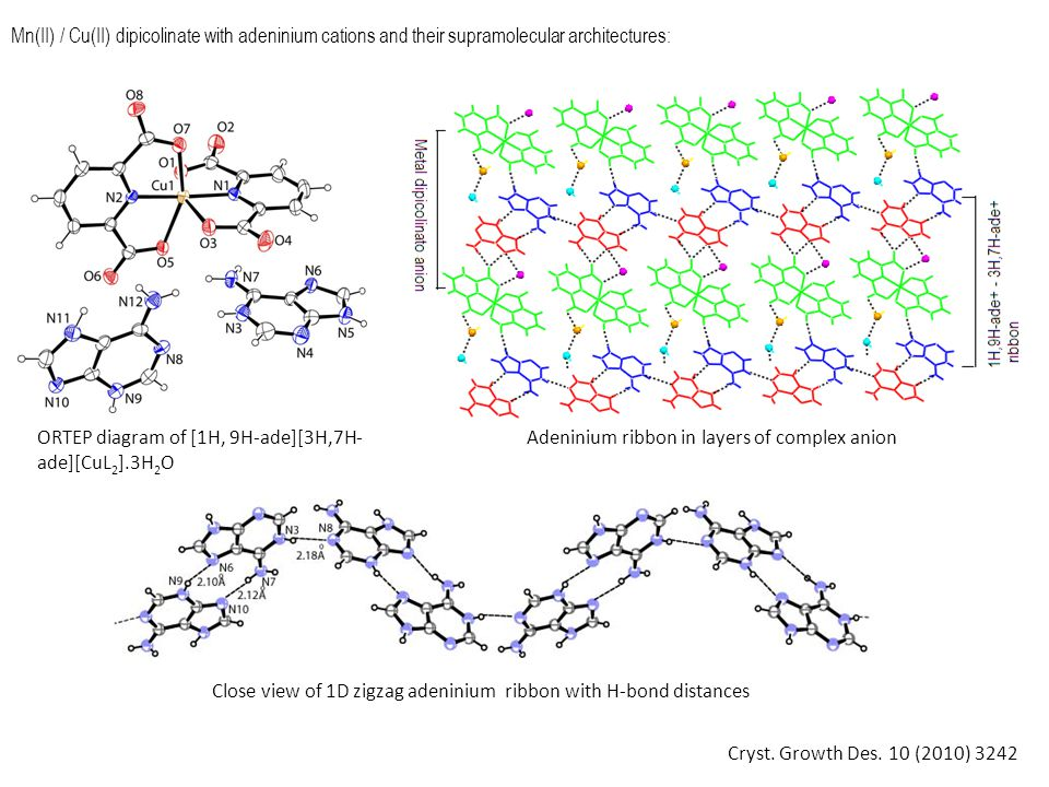 Mn(II)-dipicolinate with cytosinium cations and its supramolecular architectures: Packing diagram of [1H, 3H-cyt] 2 [MnL 2 (H 2 O)].2cyt.6H 2 O viewed along a axis ORTEP diagram of [1H, 3H-cyt] 2 [MnL 2 (H 2 O)].2cyt.6H 2 O Cryst.