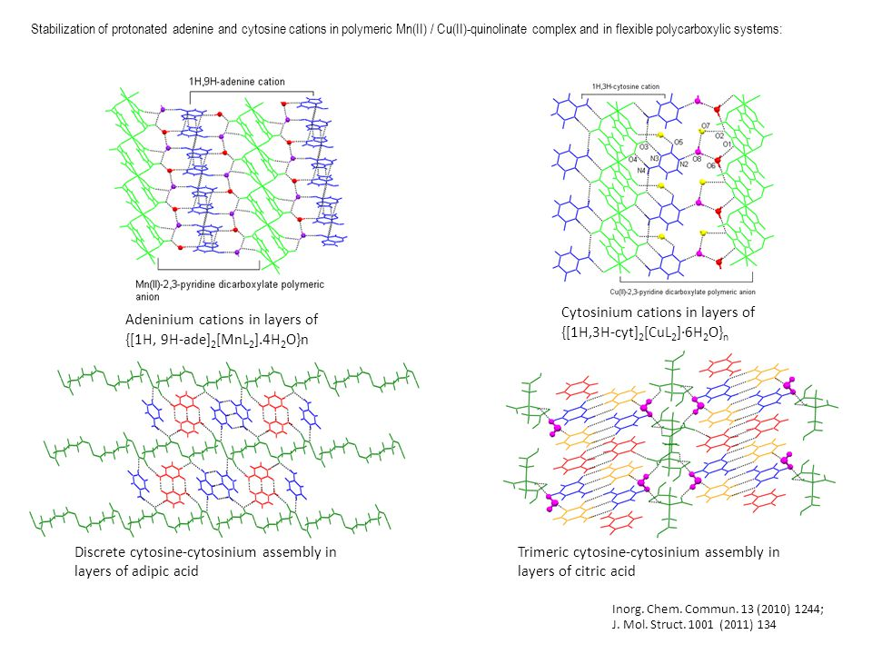 Stabilization of protonated adenine and cytosine cations in polymeric Mn(II) / Cu(II)-quinolinate complex and in flexible polycarboxylic systems: Cytosinium cations in layers of {[1H,3H-cyt] 2 [CuL 2 ]∙6H 2 O} n Adeninium cations in layers of {[1H, 9H-ade] 2 [MnL 2 ].4H 2 O}n Discrete cytosine-cytosinium assembly in layers of adipic acid Trimeric cytosine-cytosinium assembly in layers of citric acid Inorg.