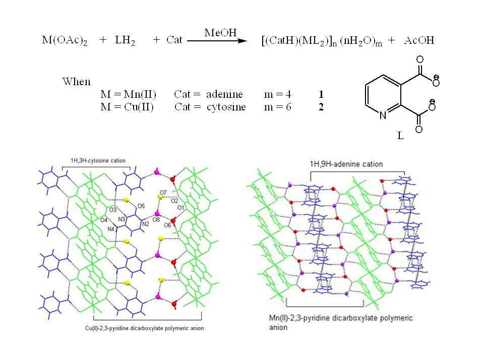 Cationic sodium cluster [Na 4 (μ-H 2 O) 6 (H 2 O) 10 ] 4+ Coordination of cationic sodium cluster [Na 4 (μ-H 2 O) 6 (H 2 O) 10 ] 4+ [Mg(H 2 O) 5 ] units are coordinated to dipicolnate complex [CuL 2 ] dianions are held I by polymeric aqua-bridged sodium cations [Ca(H 2 O) 4 ] 2+ units are bridged by the dipicolinate complex anions [CuL 2 ] dianions are hel by polymeric aqua-bridged potassium cations Coordination by cationic ligands