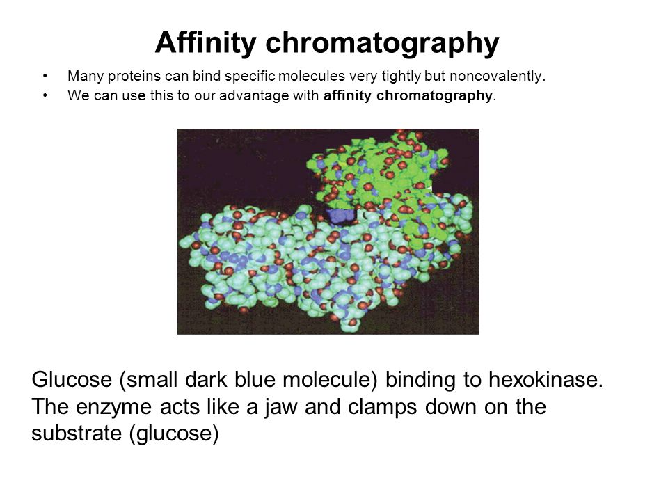 Affinity chromatography Many proteins can bind specific molecules very tightly but noncovalently. We can use this to our advantage with affinity chrom