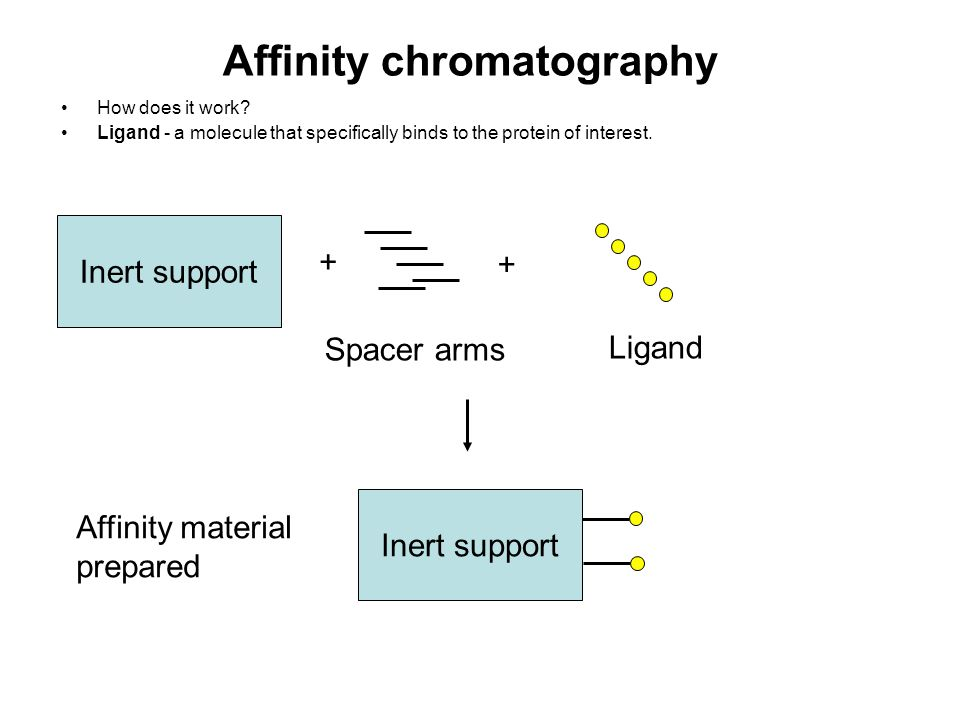 Affinity chromatography How does it work? Ligand - a molecule that specifically binds to the protein of interest. Inert support Spacer arms + + Ligand