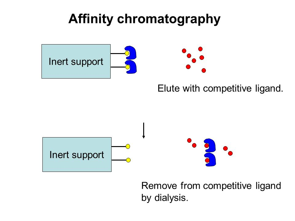 Affinity chromatography Inert support Remove from competitive ligand by dialysis. Inert support Elute with competitive ligand.