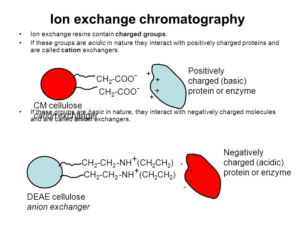 Ion exchange chromatography Ion exchange resins contain charged groups. If these groups are acidic in nature they interact with positively charged pro