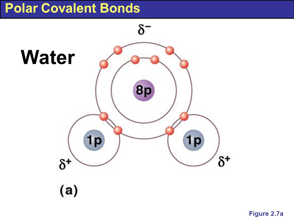Polar Covalent Bonds Figure 2.7a Water