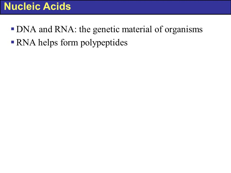 Nucleic Acids  DNA and RNA: the genetic material of organisms  RNA helps form polypeptides