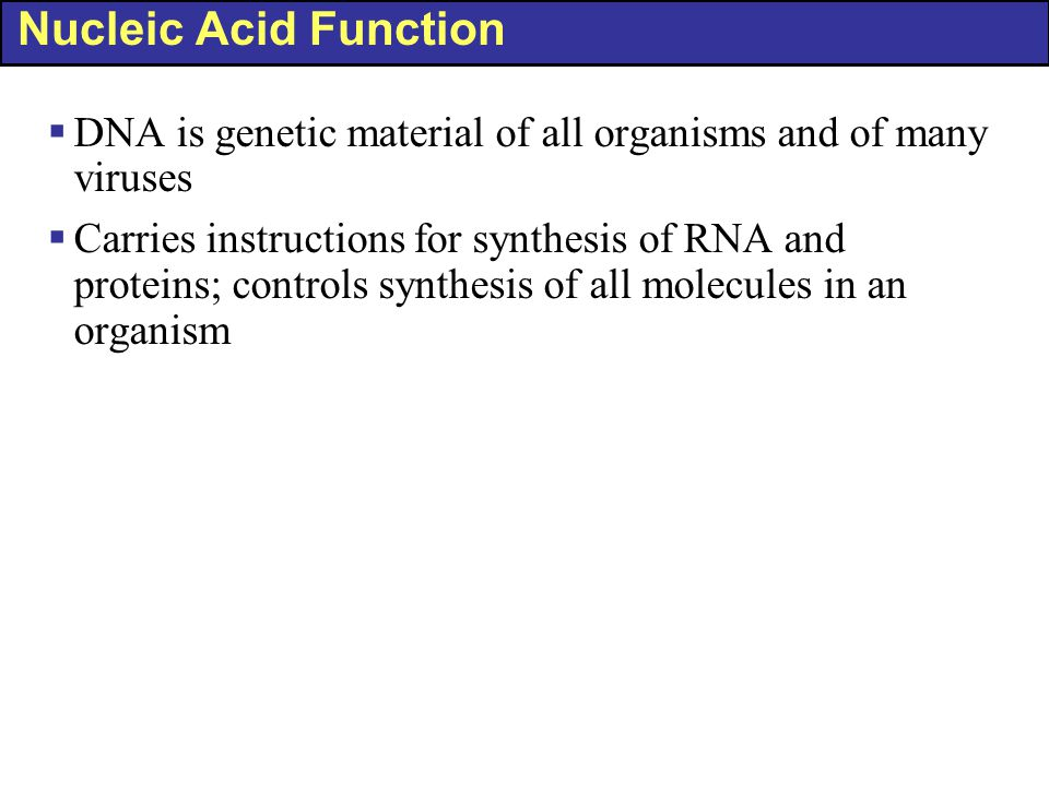 Nucleic Acid Function  DNA is genetic material of all organisms and of many viruses  Carries instructions for synthesis of RNA and proteins; control