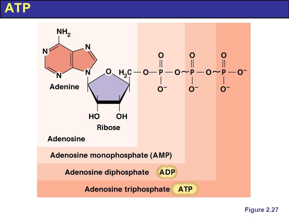 ATP Figure 2.27