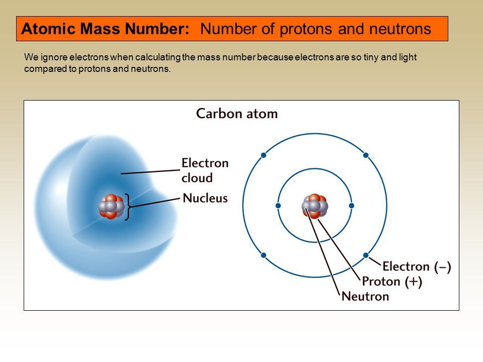 Atomic Mass Number: Number of protons and neutrons We ignore electrons when calculating the mass number because electrons are so tiny and light compar