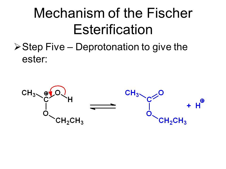 Mechanism of the Fischer Esterification  Step Five – Deprotonation to give the ester: