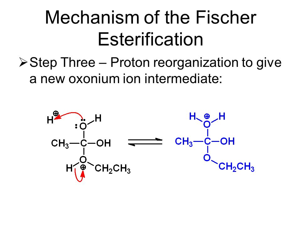 Mechanism of the Fischer Esterification  Step Three – Proton reorganization to give a new oxonium ion intermediate: